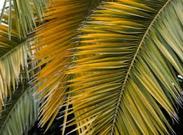 palm leaves for palm sunday waving the palms uua org