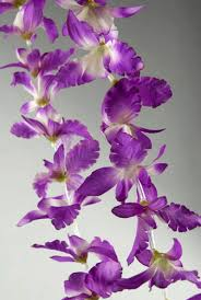 orchid flower purple orchid flower leis