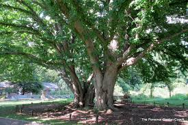 garden designers roundtable celebrating trees the personal