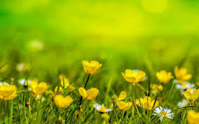 spring nature wallpaper android apps on google play