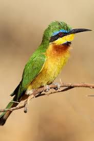earliest beginnings of bird evolution brought into focus with new