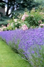 best 25 rose garden design ideas on pinterest backyard garden