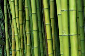 Bamboo Floor Protector Top 10 Crucial Bamboo Flooring Pros And Cons Theflooringlady