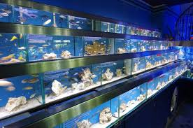 Aquascape Shop Would You Like To Have Marine Aquarium At Home Styfisher Aquarium