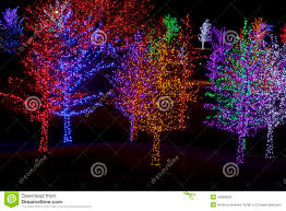 trees wrapped in led lights for christmas stock photo image
