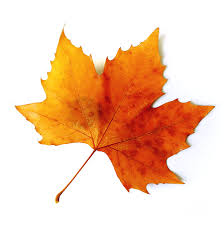 autumn leaves clip art 41730 free icons and png backgrounds