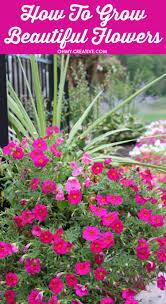 Beautiful Flowers How To Grow Beautiful Flowers Oh My Creative