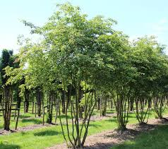 938 best garden trees images on plants garden and