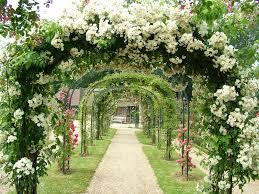 www flowers what is landscape gardening green hedges stony gardens flower