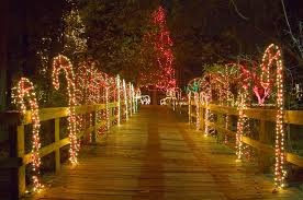 riverbanks botanical garden lights before christmas riverbanks zoo x mas intended for