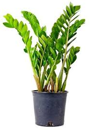love plants but no sunlight these plants can be your best buddy