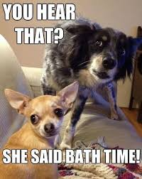 Funny Meme Dog - 67 best dog memes images on pinterest doggies puppies and funny