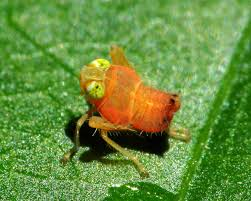 no creepy crawlies here gallery of the cutest bugs