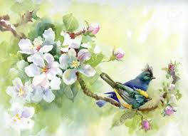 painting collection birds of spring stock photo picture and