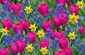 image of spring flowers fantastic images of spring flowers pictures spring flowers spring