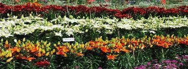 ooty botanical garden botanical garden entrance fees botanical