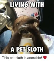 Memes Sloth - 25 best memes about sloth sloth memes