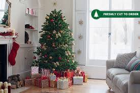 real nordmann fir tree 3 sizes