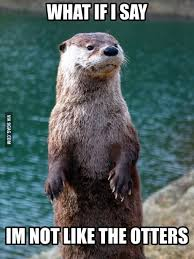 Otter Memes - 100 best otter memes images on pinterest funny animals otters and