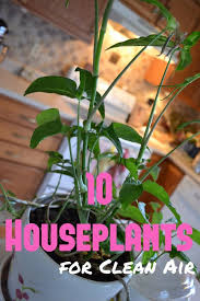 Air Purifying Plants 9 Air by 10 Houseplants For Clean Air 1 Peace Lily Spathyphyllium 2 Pot