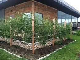 berry garden trellis designs bing images gardening tips