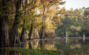 Louisiana forest images Louisiana forests being sacrificed to fuel europe 39 s biomass boom jpg