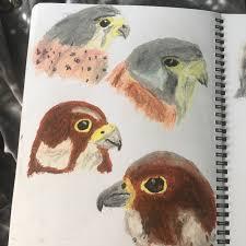 oil pastel sketches of birds my sketchbook pinterest