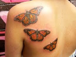 superb monarch butterflies on back