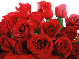 a dozen roses how you can get a dozen roses for free one small catch hawaii