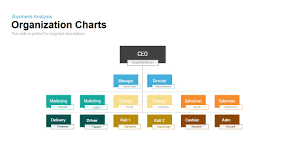 organization charts powerpoint and keynote template slidebazaar
