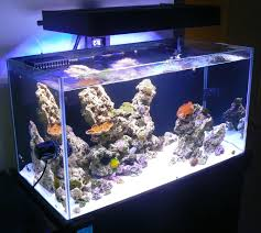 stunner led aquarium light strips any pros cons on ecoxotic led module lighting reef central
