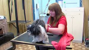 toilettage de l affenpinscher dog welcome anderlecht chien toilettage on vimeo