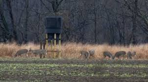Best Bow Hunting Blinds Hunting Blind Placement For All Phases Of The Season Banks Outdoors