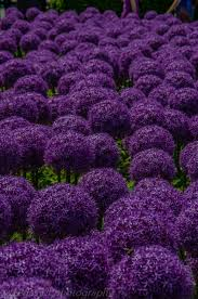 Shades Of Purple 1745 Best All Things Purple Images On Pinterest All Things