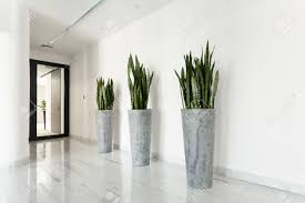 indoor plants stock photos royalty free indoor plants images and