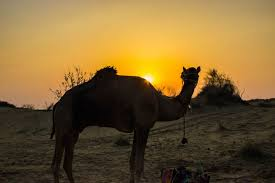 thar desert animals our global trek