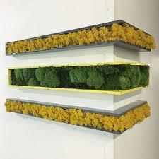 best 25 moss wall ideas on pinterest moss wall art moss art