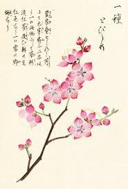 Japanese Flowers Pictures - flower paintings japanese peony magnolia kiku flowers