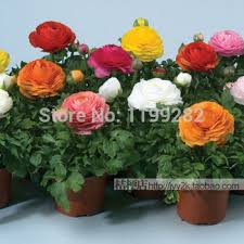 free shipping flowers cheap inside seeds find inside seeds deals on line at alibaba