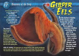image gulper eels front jpg wierd n u0027wild creatures wiki