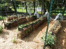 Mulching Vegetable Garden by Vegans Living Off The Land Straw Bale U0026 Lasagna Gardening Sheet