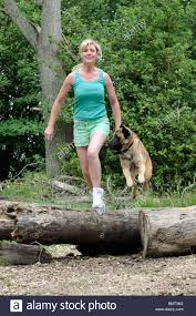 belgian shepherd nature woman keeping fit running and jumping over logs with a belgian