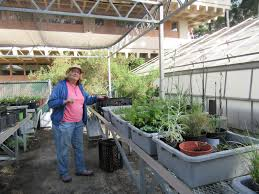 california native plants for sale native plants at csu dominguez hills