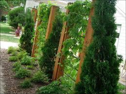 Privacy Garden Ideas Landscape Screen Gardening Design