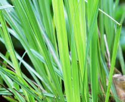Tropical Rainforest Plant Species List - southeast asia flora