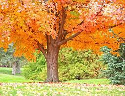 fall tree preparation tree service inc