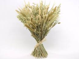 10 best dried grains ideas images on grasses dried