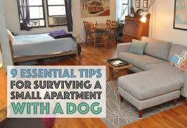 Laminate Floors With Dogs 9 Essential Tips For Surviving A Small Apartment With A Dog The