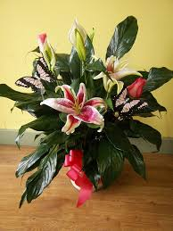 plants gifts collection southside gardens milwaukee florist
