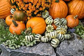 halloween pumpkin decorating ideas lamburt corporation